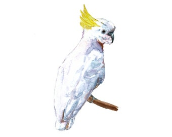 Cockatoo - Unique Watercolour Illustration -  Australian Birds Series  - Wall Art Print - Poster