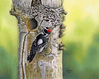 "Downy Woodpecker watercolor, bird watercolor painting, bird painting, Giclee print from original watercolor painting, 6 1/2"" x 9 1/2"""