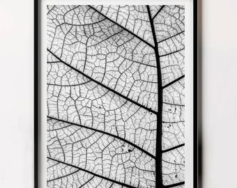 Plant Leaf Wall Art, Woodland Print, Nature Photo, Minimalist Nature Photography, Nature Art, Leaf Print Downloadable
