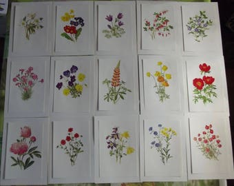 15 old posters school purple 1970 Carnation daintiness, Periwinkle, heart of Mary, Botany, lupin, Peony, linen, Christmas Rose, Primrose