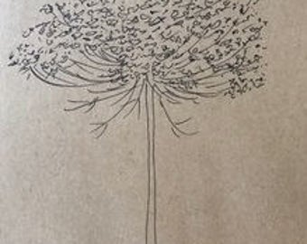 Queen Anne's Lace #3 (ink)