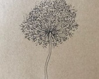 Queen Anne's Lace #4 (ink)