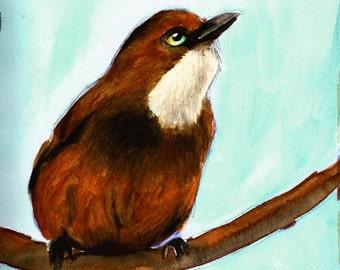 White Throated Laughing Thrush Watercolor bird print