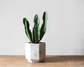 Medium Octagonal Concrete Planter perfect for a Cactus or Succulent Plant // Concrete Plant Pot- Handmade