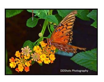 Happiness   Photo Note Cards Happiness Butterfly Mother's Day
