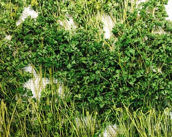 Parsley fields ,photography ,print,farm life,photo,foto,nyc,fotografia,present,gift,4x7,5x7,8x10x8x11