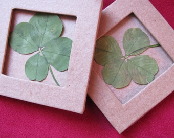 a small frame in cardboard paper with a nice 4-leaf clover good luck!