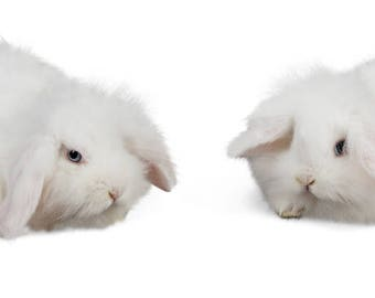 Bunny Easter overlay  - Two White Bunnies digital download