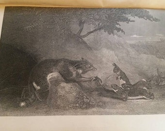 Animal lithograph 6x9