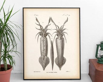 8x10 print, 11x14 print, Wall art vintage, Nautical decor, Squid art, Squid print, Instant download print, Antique nautical print, JPG