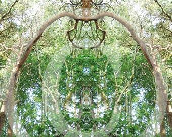 forest secret 6, posters and fine art print 20 x 30 cm 30 x 40 cm, fine art print 29, 7 x 42 cm