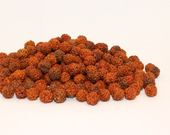 LOOSE RUDRAKSHA SEEDS  beads Rudraksha Loose beads 8MM
