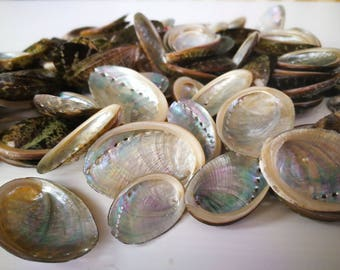 100 X Small abalone sea shells, abalone shell, beach shells decor