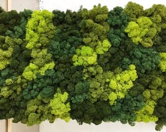 Mixed Green Reindeer Moss Art