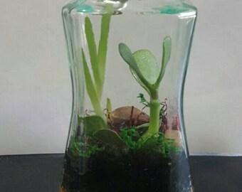 Succulent Terrarium Jar