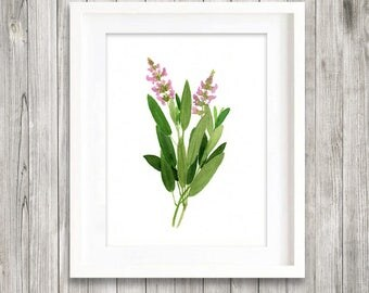 Sage print of watercolour painting, Herb painting, Botanical Print, green home decor art print, kitchen decor