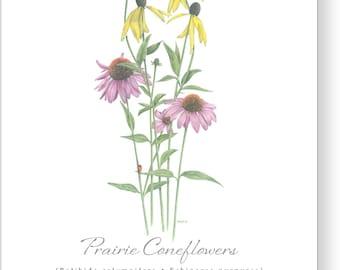 Prairie Coneflowers (Boxed Set of 5)