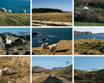 Scottish sheep, mountains, landscapes, natural paysayges, highlands scotland, scotland sheep, Scottish landscapes and nature