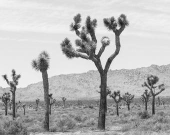 Joshua Tree Print, Desert Print, Southwest decor, Cactus Print, Minimalist Art, Desert landscape, Fine Art Desert Print, Joshua Tree