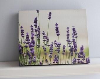 """Photo Canvas Lavender 8x10"""" Art"""