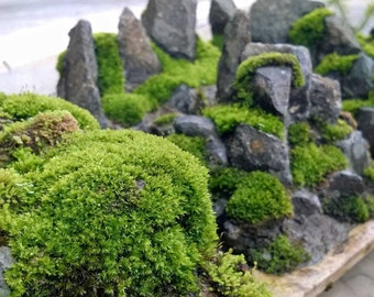 Moss rocks beautiful indoor or outdoor addition, moss garden, fairy garden