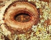 Eye of Tree : hardback ph...