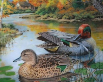 Green Winged Teal Collector Plate