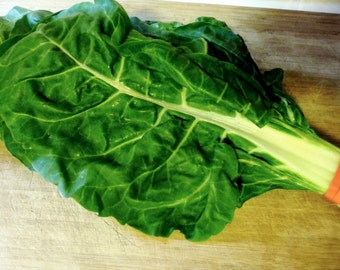 Fordhook Swiss Chard Seeds-Organic-NON-GMO-Vegetable Seeds
