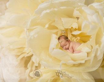 Newborn Yellow Tulips Digital Backdrop