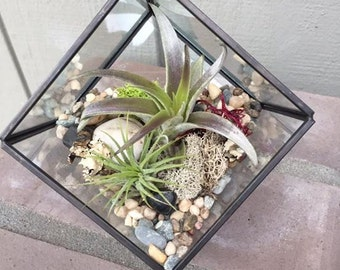 Glass Geometric Square Terrarium with Air Plants, KIT to make terrarium, DIY kit to make your own terrarium, air plants, terrarium