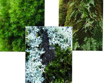 Trees of the Pacific Northwest, Forest Print, Nature Photography, Print Set, Moss Wall Art, Print Set of 3, Print Series, Fine Art Prints