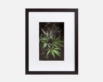 Weed Photography, Cannabis Art, Weed Art, Marijuana Photograph, 420 Weed Art, Marijuana Poster, Cannabis Photography, Marijuana Poster