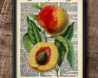Peach · Instant Download · Dictionary · Fruit · Vintage ·  Wall · Printable · Digital File #98