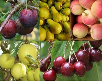 Grow your own Fruit Trees Offer - FIVE Different Trees