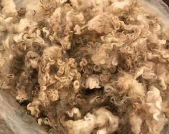 Raw White Leicester Longwool Fleece for Handspinning (Miranda)