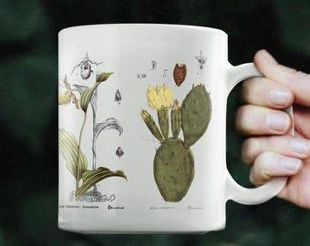 Botanical Illustration Mug - Botanical Mug, Botanical Art, Botanical Print, Botany Art, Vintage Illustration, Flower Art, Plant Art, Gift
