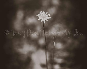 INSTANT DOWNLOAD - Sepia flower photograph - high resolution - vintage - printable wall art