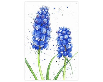 Hyacinth Watercolor Fine Art Print