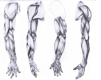 Anatomic design fine art print from the original Arm drawing pen