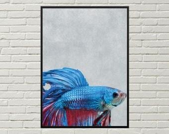 BETTA art print, betta art, nautical art print, betta fish wall art, digital betta, beach house decor, fish nursery print, fish wall print