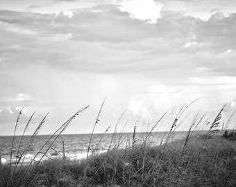 "Black and white digital image 24x36 300 dpi ""Beach Grass"""