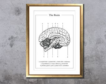 Anatomy of the brain, A4 A5 medical print, pen drawing, human anatomic art, neurology, medicine student graduation gift