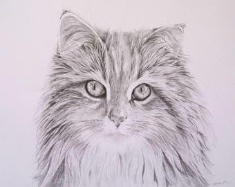 cat drawing, custom portrait, pet birthday gift, cat portrait, pet gift, portrait from photo, cat memorial, graphite portrait, pet drawing
