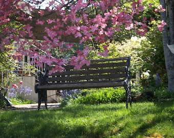 Blank Photo card-bench, dogwood