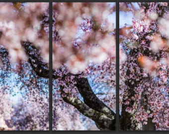 Cherry Blossoms triptych canvas