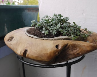 Teak wood Bowl with inlay made of concrete, planted