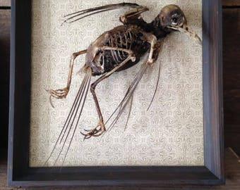 Mummified birds-Mummified decorations