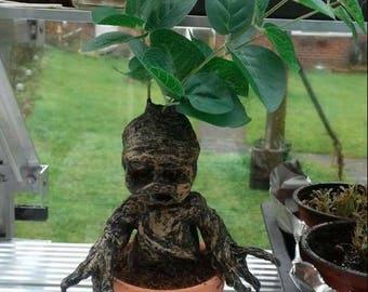 Harry potter Mandrake