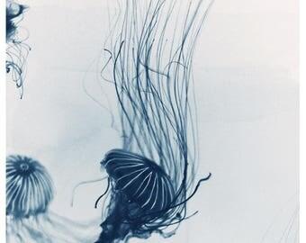 Nature Photography - Animal Art - Ocean Art - Sealife- Jelly Fish- Fine Art Photo - Deep Blue Sea #3 - Jellyfish - Home Decor - Wall Art