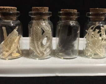 Real Boa Constrictor Ribs Corn Snake Shed Skin European Starling Feathers and Catfish Branchial Bones Curiosity Cabinet Curio Glass Vials